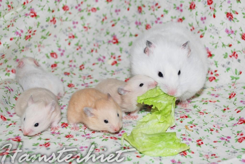 http://hamsterhiet.com/wp-content/uploads/2012/04/vvvvv-1024x685.jpg