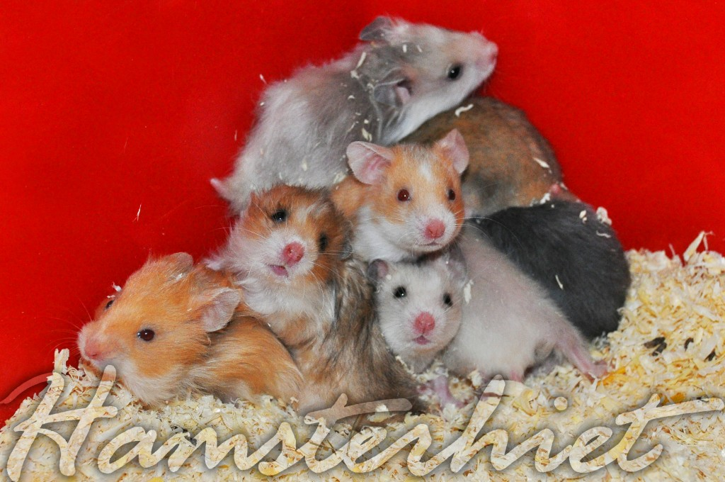 http://hamsterhiet.com/wp-content/uploads/2012/05/qw-1024x680.jpg