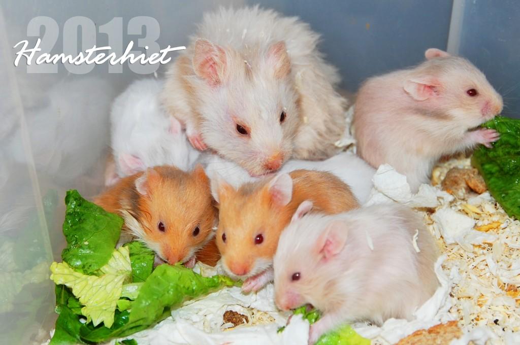 Bilderesultat for hamsterhiet kull 29