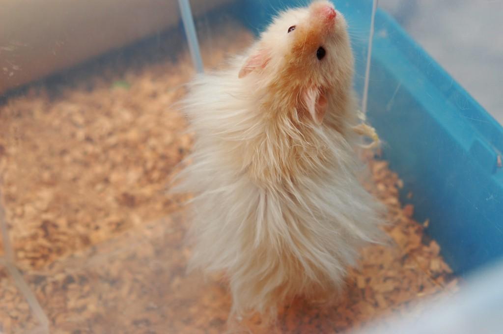Bilderesultat for hamsterhiet trym
