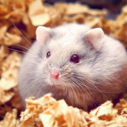 Bilderesultat for hamsterhiet holtan